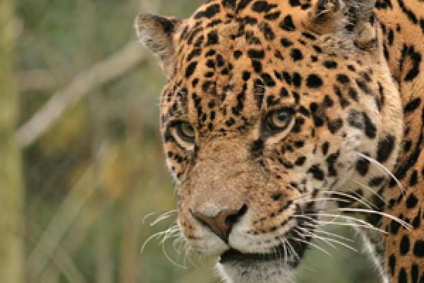 Amazona Zoo, attraction in Cromer