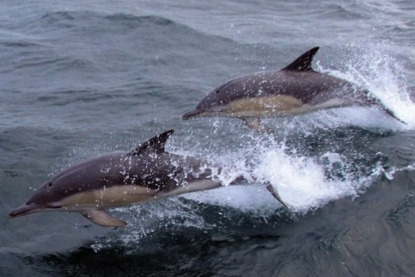 2 Dolphins swimming alongside on boat trip