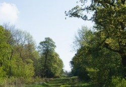 A lovely view of Brampton Woods on a summer day
