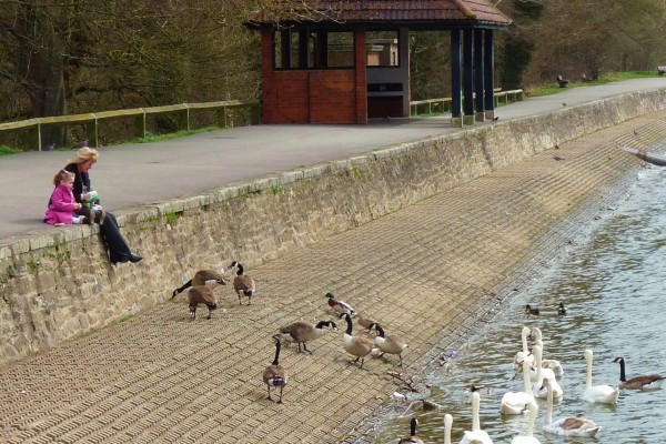 Feeding the ducks at Coate Water