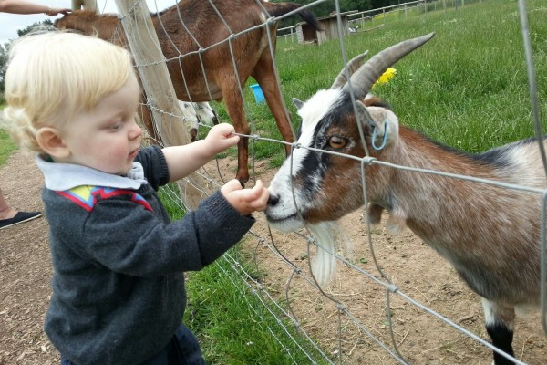 See the Animals at Cob House near Worcester