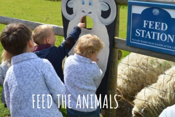Kids feeding the lambs on their day out in Hertfordshire