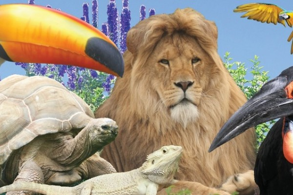 Pecan, tortoise and lion looking at the kids on their day out