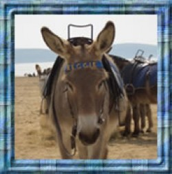 Enjoy a donkey ride on the beach front at Weston Super Mare