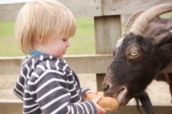 Piglets Adventure Farm in York