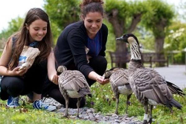 Feeding ducks Gloucestershire