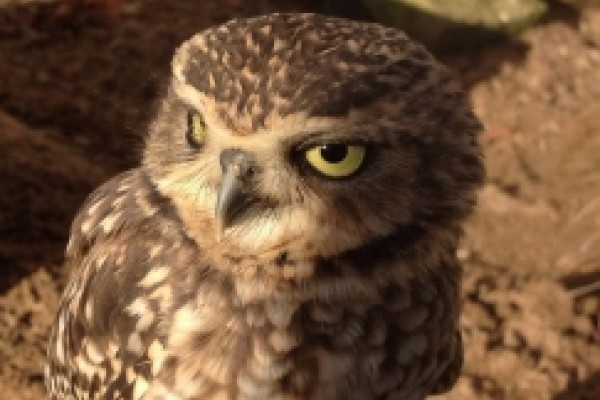 Falconry experiences in Northampton