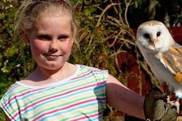 Owls at Kelburn Country Park