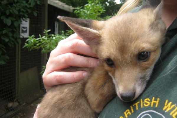 British Wildlife Rescue Centre - nr Stafford