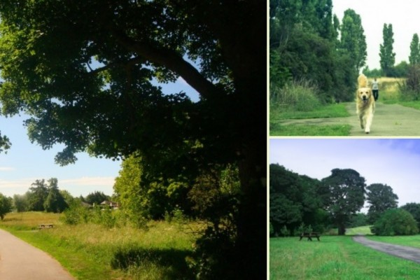 Image of Countess of Chester Park Scenes including hard pathway through trees, picnic area and dog walking