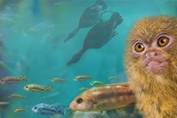 Lakes Aquarium - Newby Bridge