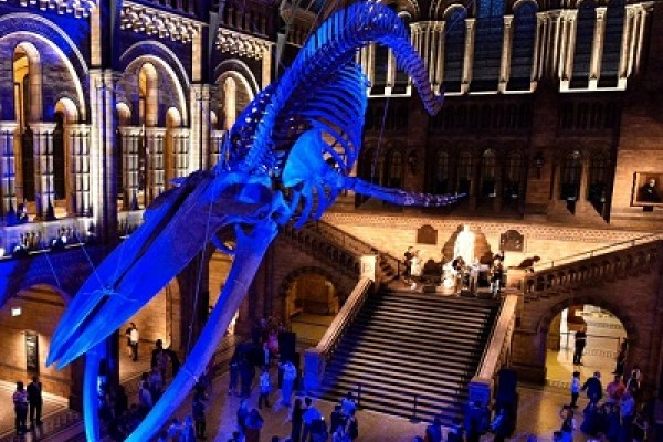Free Attraction - Natural History Museum
