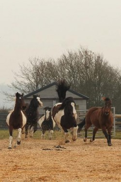 Redwings Horse Sanctuary - Oxhill