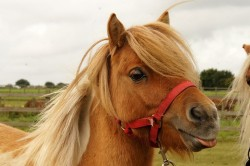 Redwings Horse Sanctuary - Aylsham