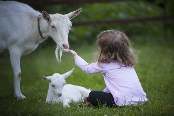 Things to do kids Buckinghamshire