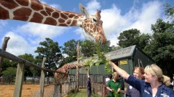Animal encounters at Whipsnade Zoo Dunstable